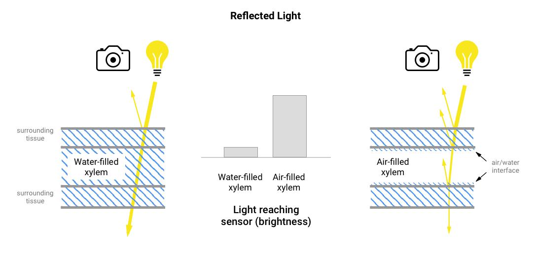 v5_reflected_light