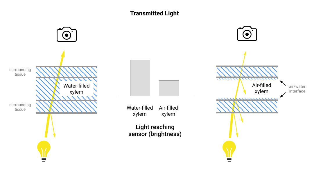 v5_transmitted_light